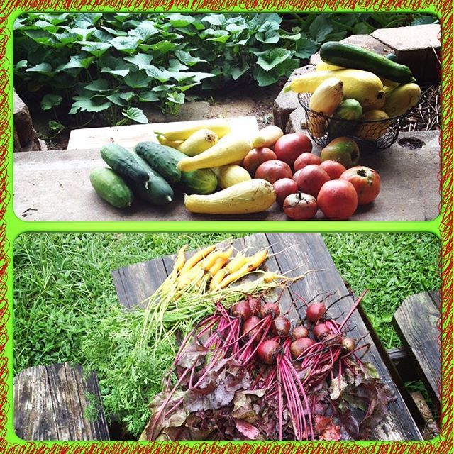 "Fresh produce from the garden. When kids come in whining about ""I'm hungry"" in the summertime, I simply unleash them in the garden and let them have at it!"